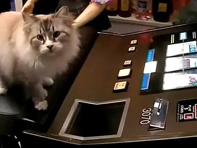 5 Pets That Love to Gamble