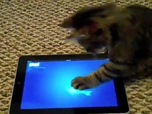 Cat ipad apps