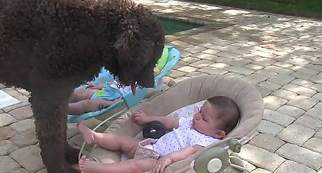 Dog Tries to Play Fetch With Babies