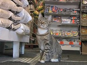 Bodega cat documentary