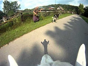 Goat Wears A Helmet Cam