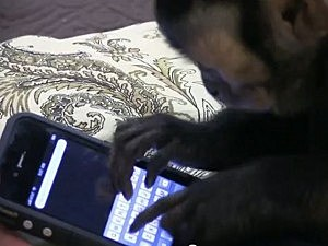 Monkey sends text on iPhone