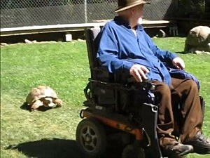 Tortoise Chases Man In Motorized Wheel Chair