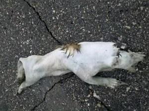 Minnesota Mystery Roadkill