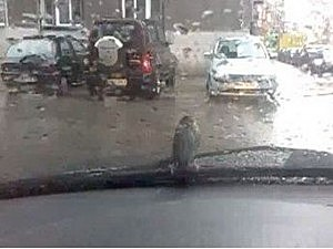 Stubborn bird won't leave wiper