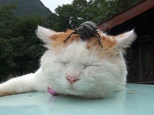 Cat allows beetle to climb on head