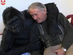 Couple has a gorilla daughter