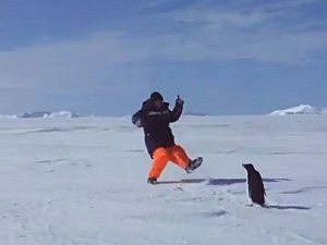 Penguin attacks man
