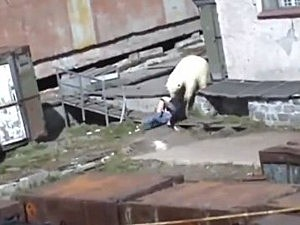 Polar Bear attacks woman