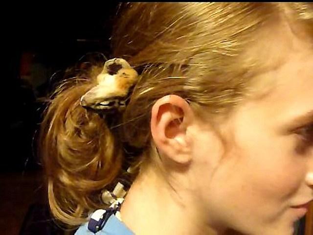 woman lets chipmunk sleep in her hair