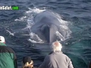 Blue Whale Encounter