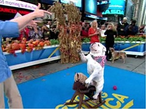 'GMA' Dog Contest