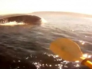 Kayaker Goes Whale Watching