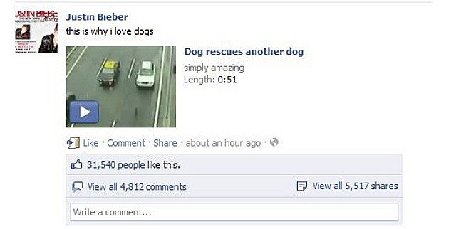 bieber dog saves dog facebook page