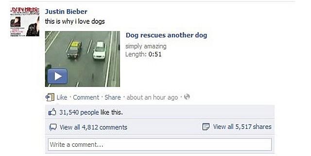 bieber dog saves dog facebook page