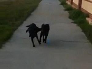 dog fetches dog
