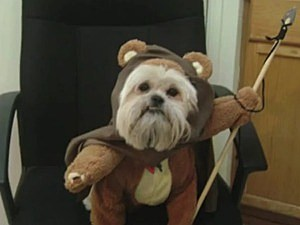 Jimmy Kimmel Pet Costume PSA