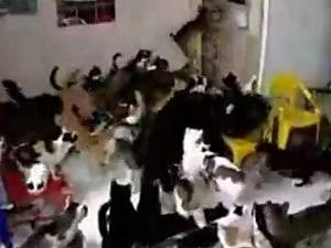 Cat Mosh Pit