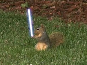 Jedi Squirrel