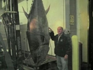 Officials Seize 881-Pound Bluefin Tuna