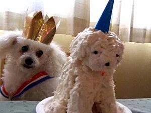 birthday poodle