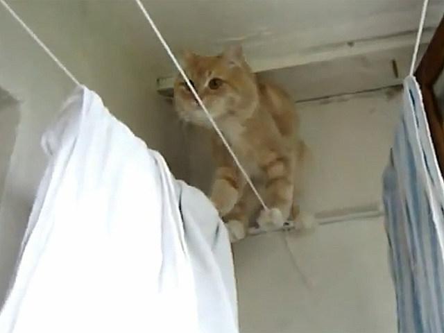 clotheslinecat