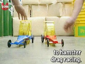 hamster drag racing
