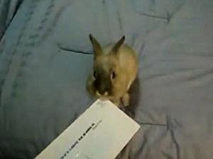 rabbit opens letter