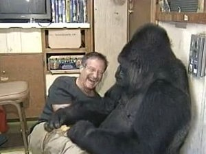 robin williams koko gorilla