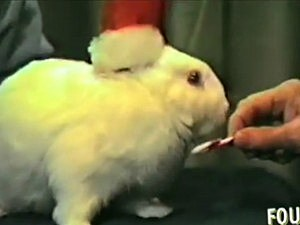 BB the Christmas Bunny
