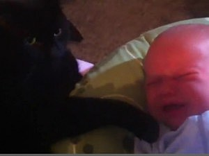 Cat Soothes Crying Baby