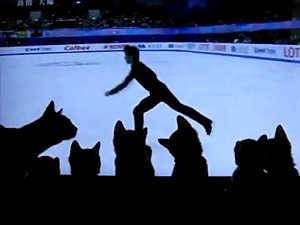 Kittens Love Ice Skating