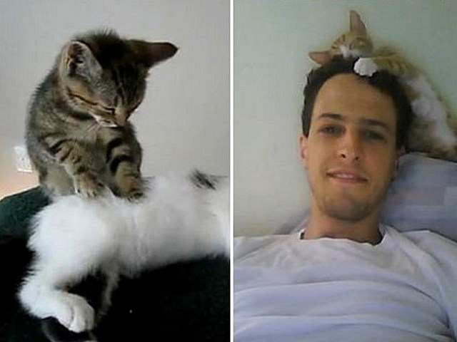 best cat videos