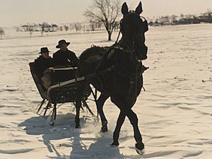 one horse open sleigh snow ride