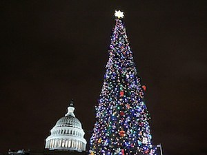 christmas capitol washington d.c. tree america