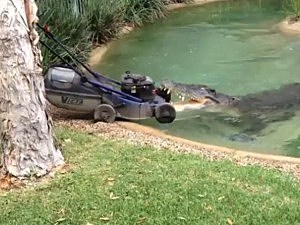 crocodile steals lawnmower