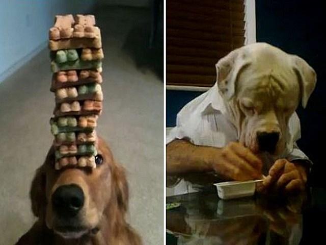 dog viral videos