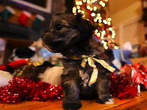 puppies christmas gifts video