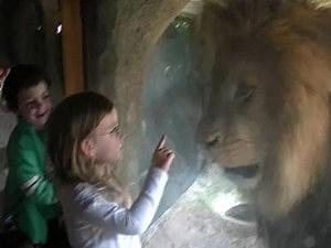 Sofia lion