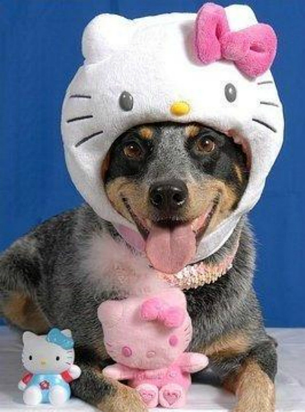 Hello Kitty dog