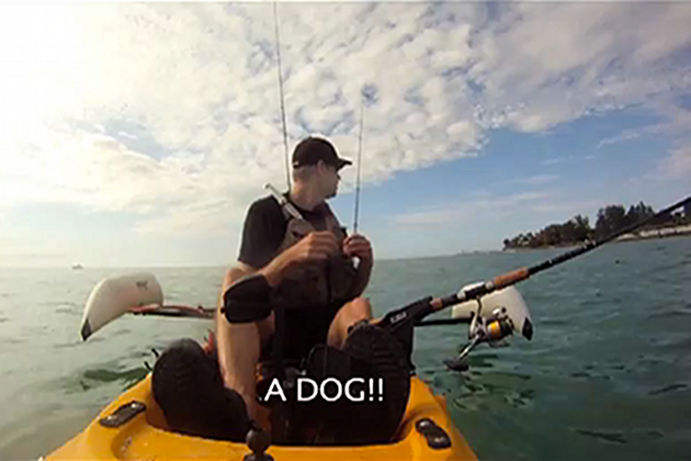 kayaker rescues dog
