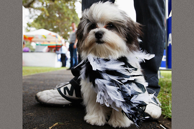 dog wears a boa for Mardi Gras