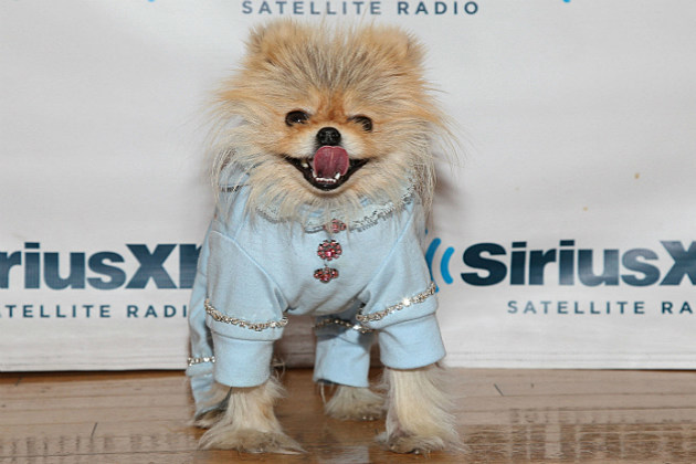 Giggy the dog from 'Real Housewives of Beverly Hills'