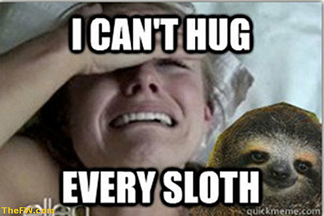 Kristen Bell Meme hug sloth is kristen bell's sloth meltdown meme worthy? [images],Sloth Meme Images