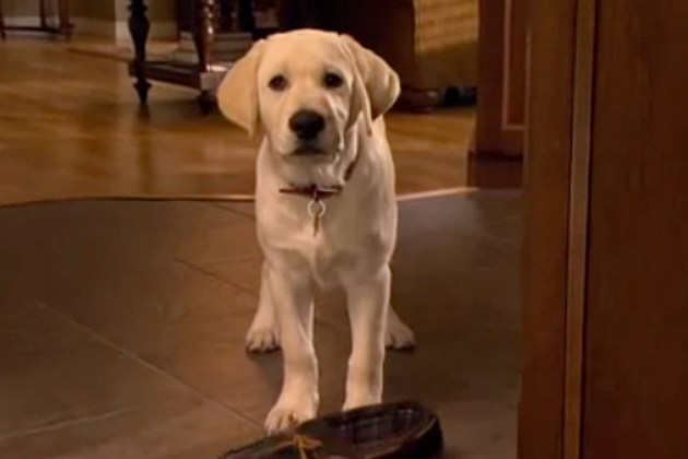 Rody as Marley in 'Marley & Me: The Puppy Years'