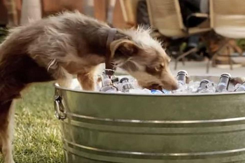 Rescue dog has unique skill in bud light super bowl 2012 rescue dog has unique skill in bud light super bowl 2012 commercial video mozeypictures Choice Image
