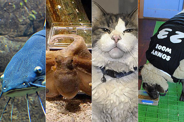 animals that can predict the future