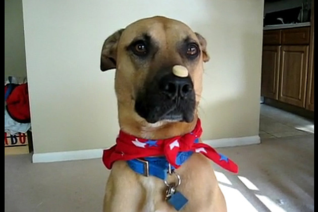 Super Turbo balances a biscuit on his nose