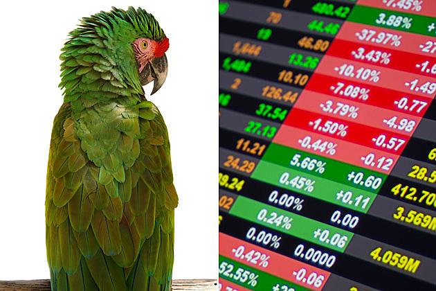 psychic parrot stock market