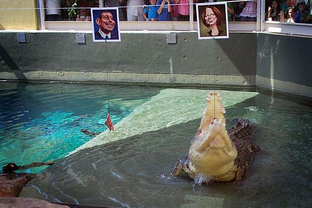 Harry, psychic crocodile